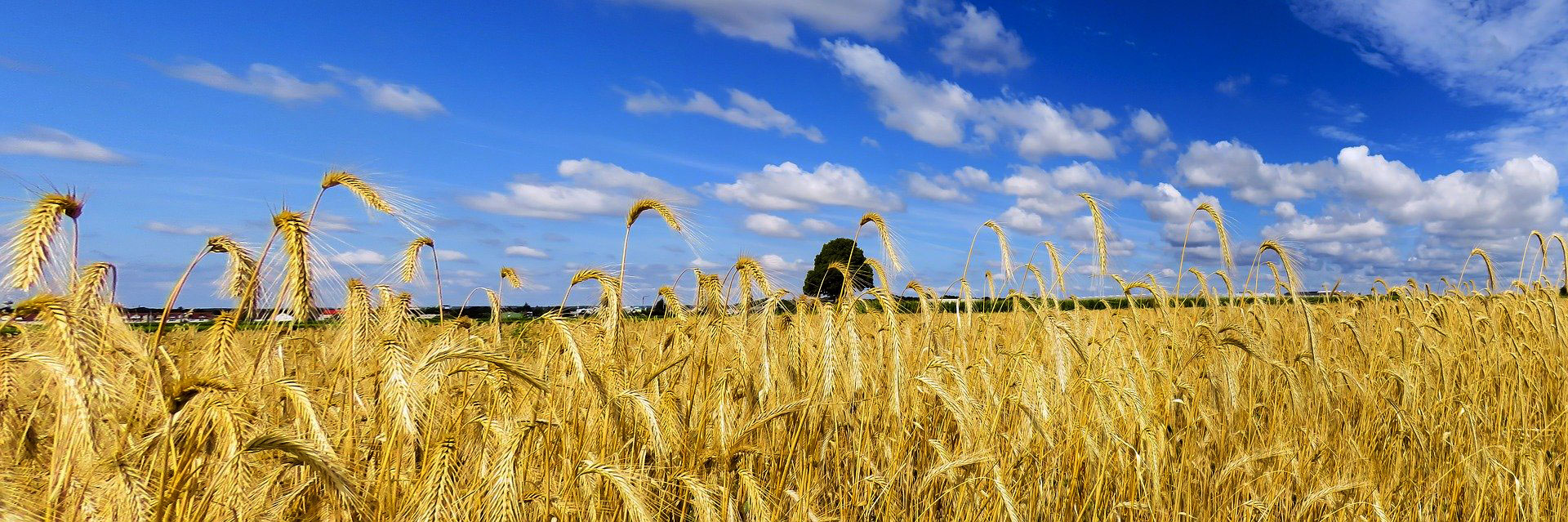 Agriculture paysage